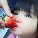 初めてのイチゴ狩