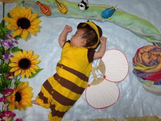 ハチさんのねんね