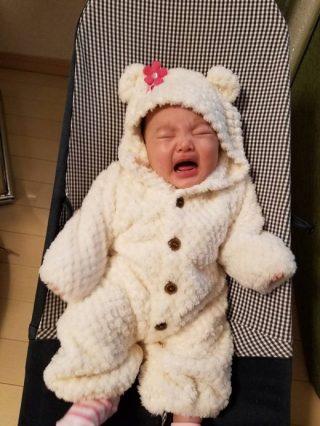 くまの赤ちゃん